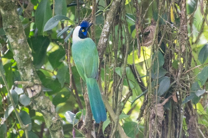 Que Faire A Jardin En Colombie Un Paysage Enchanteur Des Andes