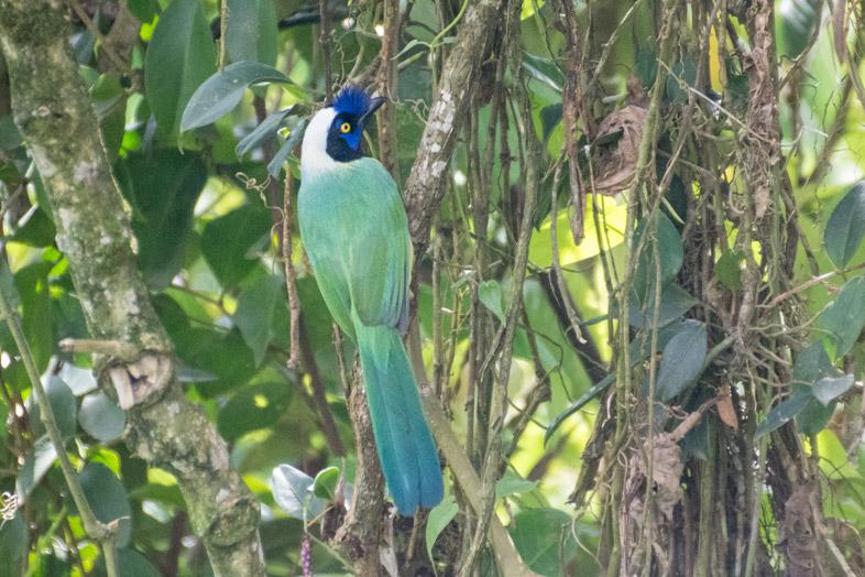 birdwatching-colombie-jardin-que-faire