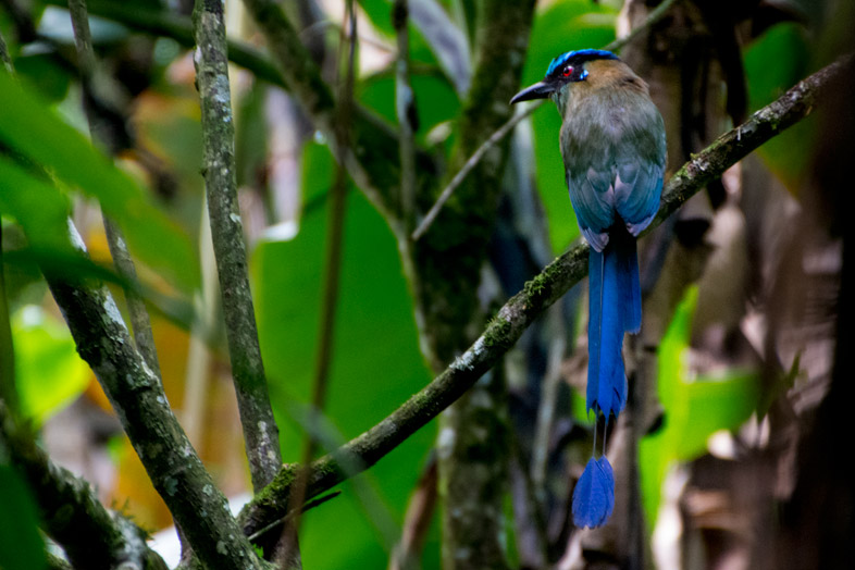 jardin-colombie-birdwatching-que-faire-motmot