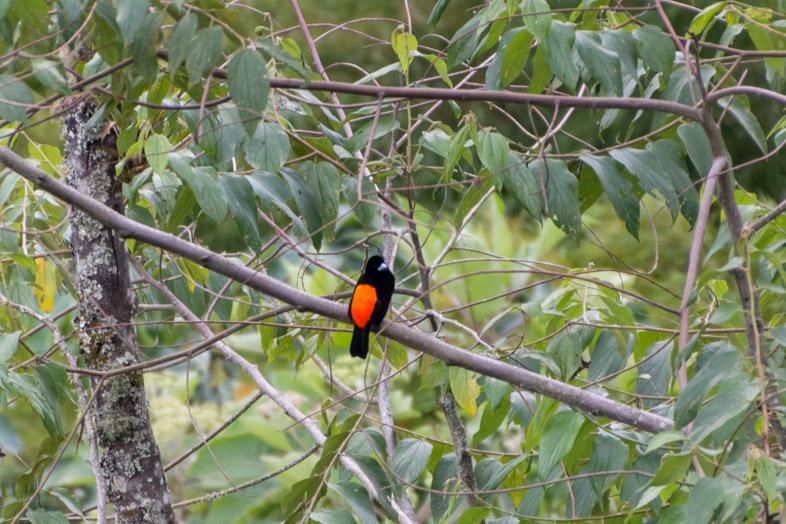 oiseaux-jardin-colombie-village-colonial-eje-cafetero