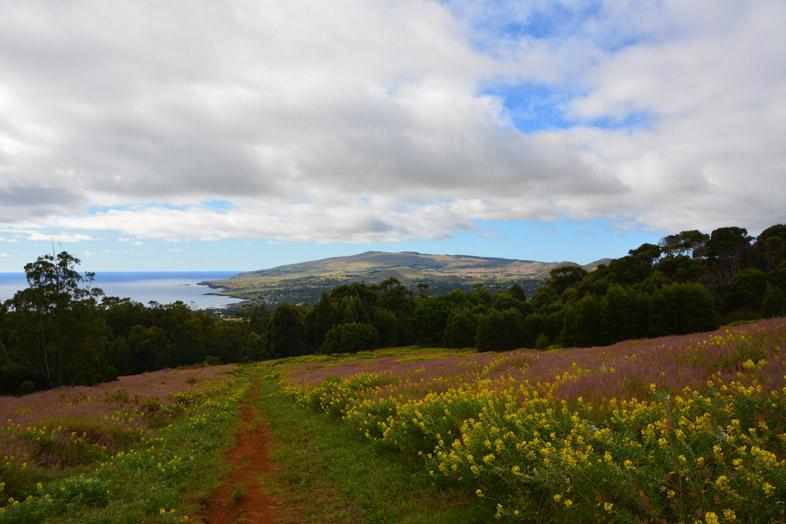 Chemin Qui Mène Du Volcan Maunga Terevaka à Hanga Roa Sur L'île De Pâques