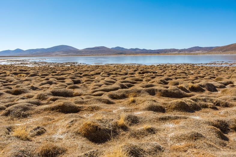 Des Formations étranges Près De La Laguna Vinto Dans Le Sud Lipez En Bolivie
