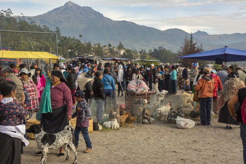 La Foule Au Marché Des Animaux à Otavalo En Equateur