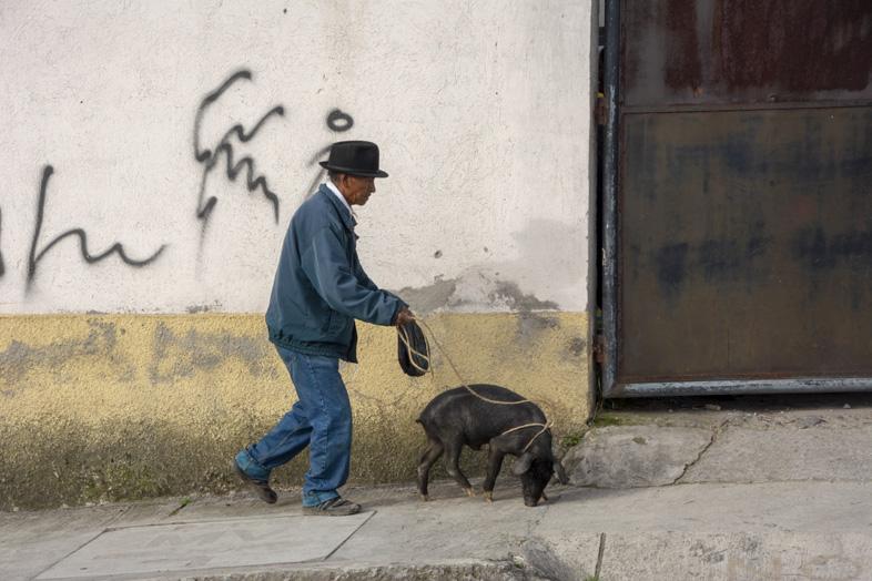 Un Habitant D'otavalo En Equateur Promène Un Cochon En Laisse