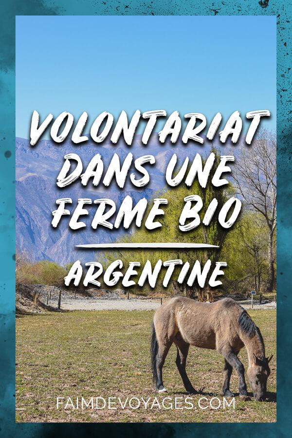 Chevaux Qui Broutent De L'herbe Dans Une Ferme Biologique De Notre Volontariat En Argentine