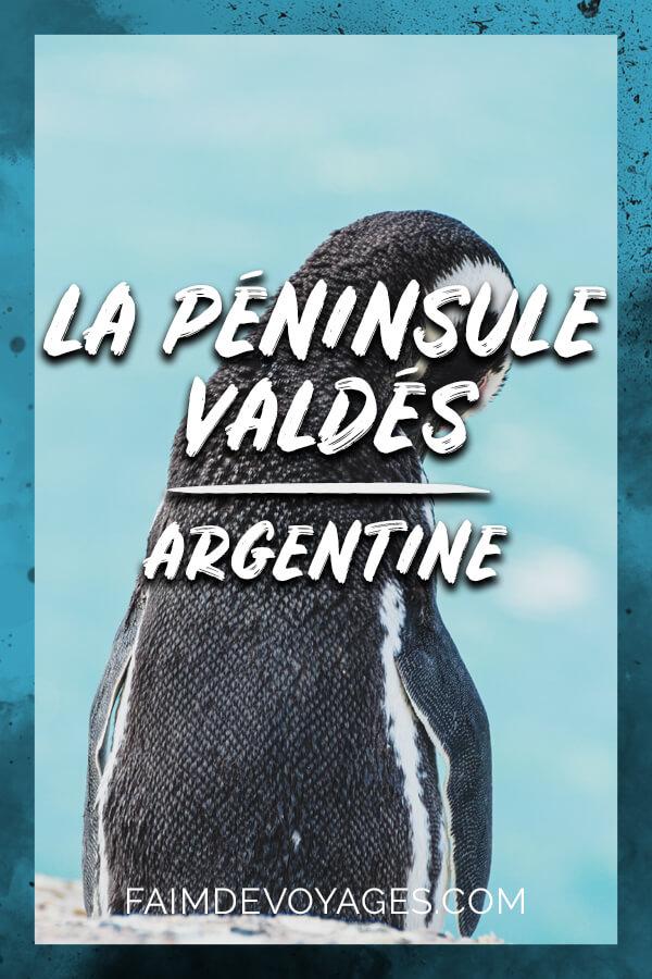 Un Manchot Face à L'océan à La Péninsule Valdès En Argentine