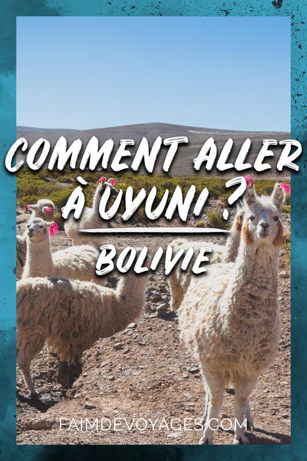 Lamas sur la route pour aller à Uyuni en Bolivie