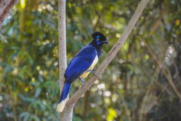 Oiseau emblématique de notre long Voyage en Argentine