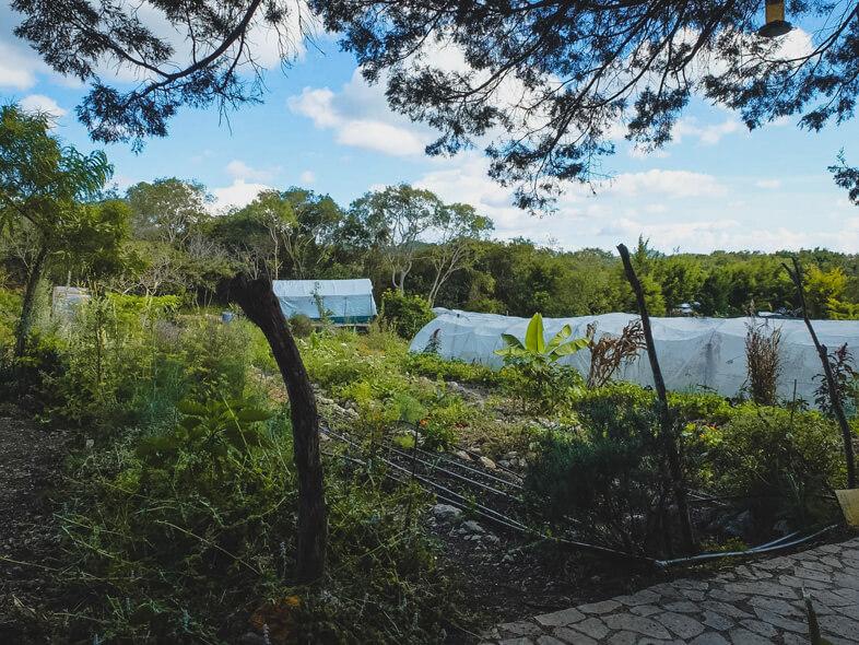 Jardin Bio Du Volontariat Tsomanotik Dans Le Chiapas Au Mexique