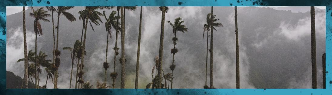Palmiers De La Vallée De Cocora en Colombie