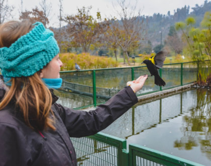 Un Oiseau Se Pose Dans La Main De Cécilia Au Chili Postshow