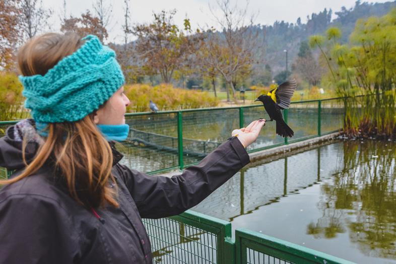 Un Oiseau Se Pose Dans La Main De Cécilia Au Chili