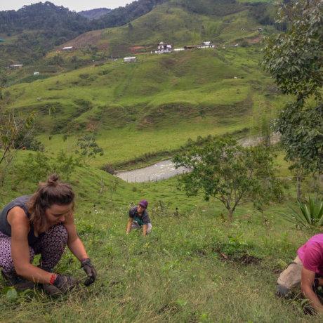 Desherbage En Volontariat En Colombie Postshow