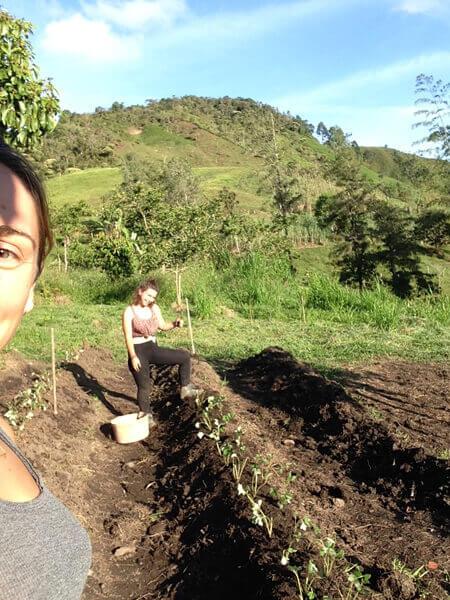 Vue Du Potager De Tierra Dulce En Colombie Avec Les Volontaires
